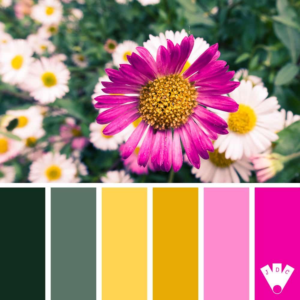 Color palette d'une photo de pâquerettes.