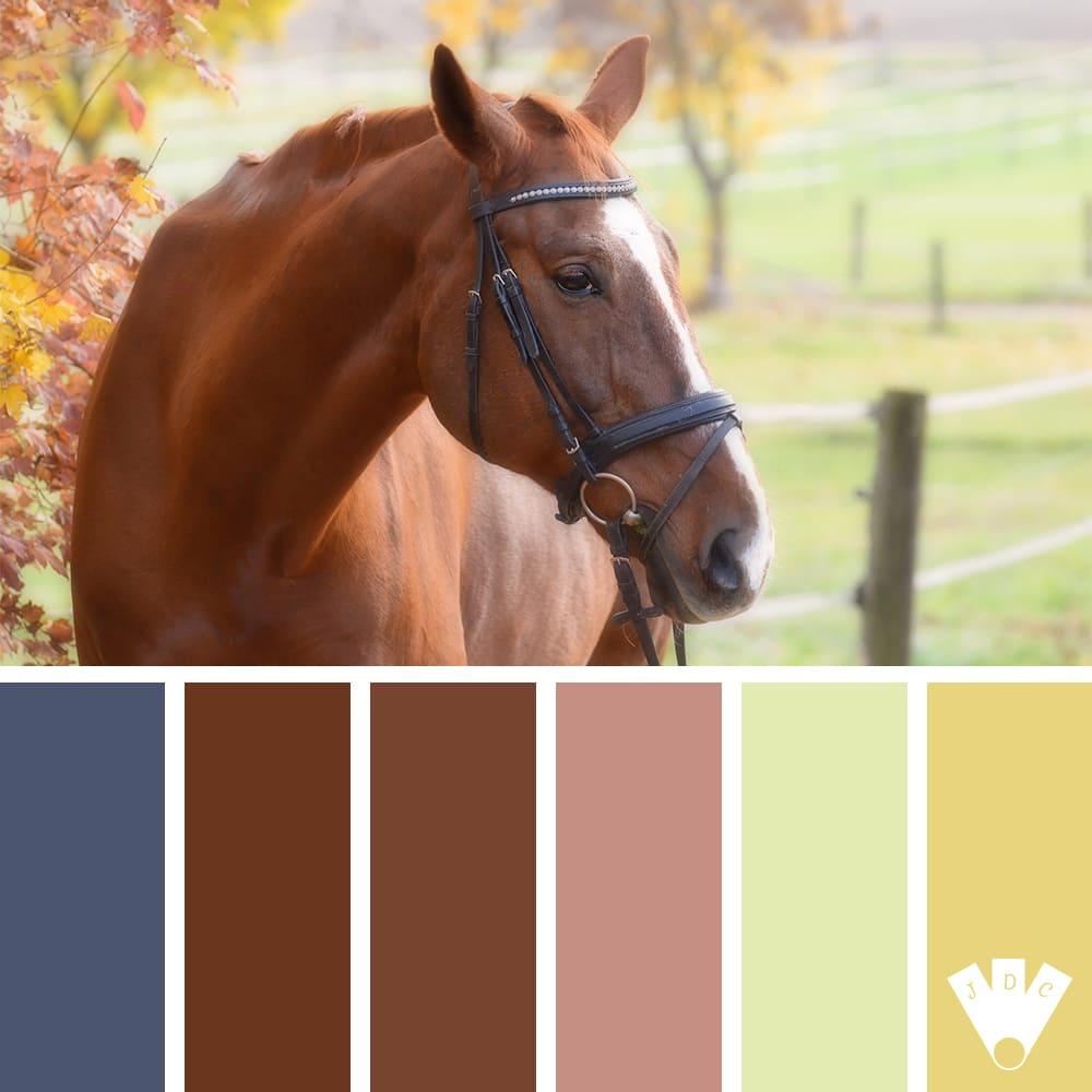 Color palette d'un cheval dans un près