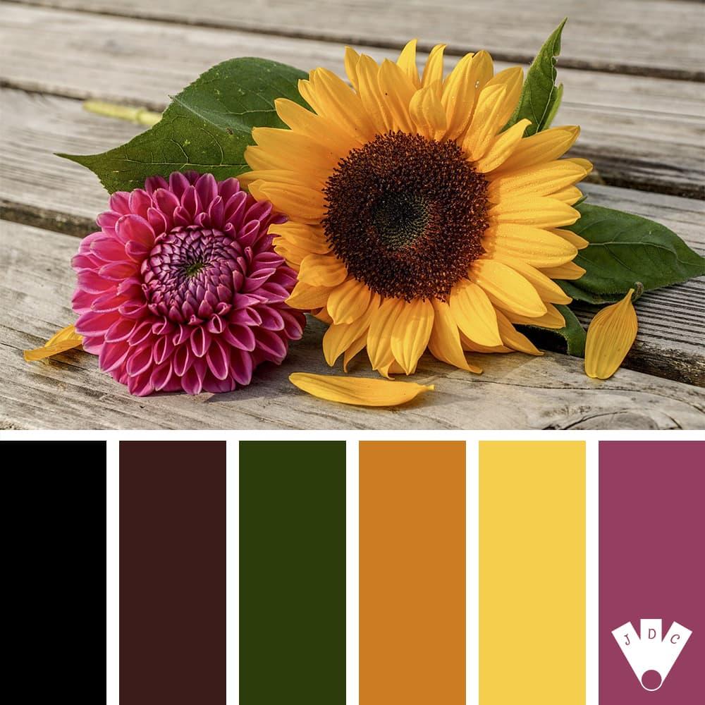 Color palette pour un peu de couleur avec ce tournesol et ce dahlia