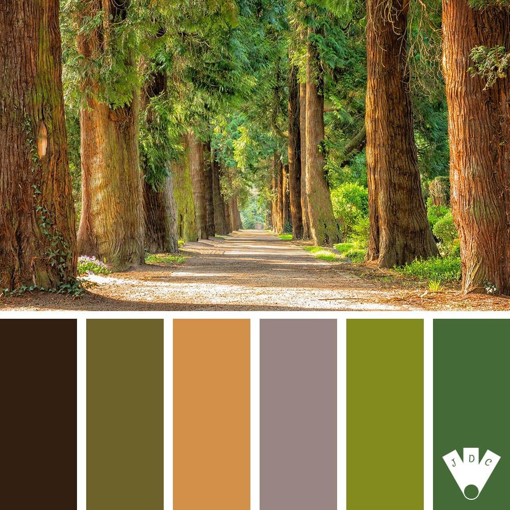 Forêt #1
