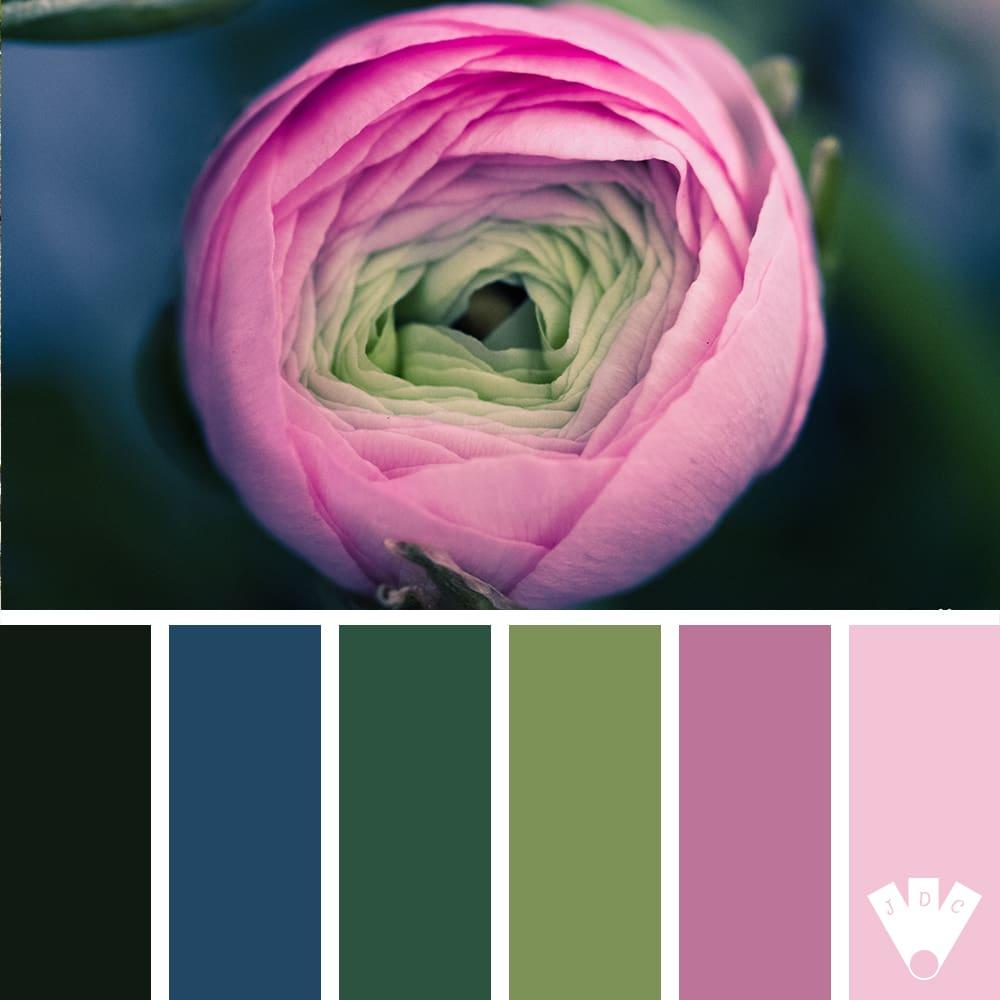 Color palette d'une fleur en train de s'ouvrir. Photo de Callistta Photographie