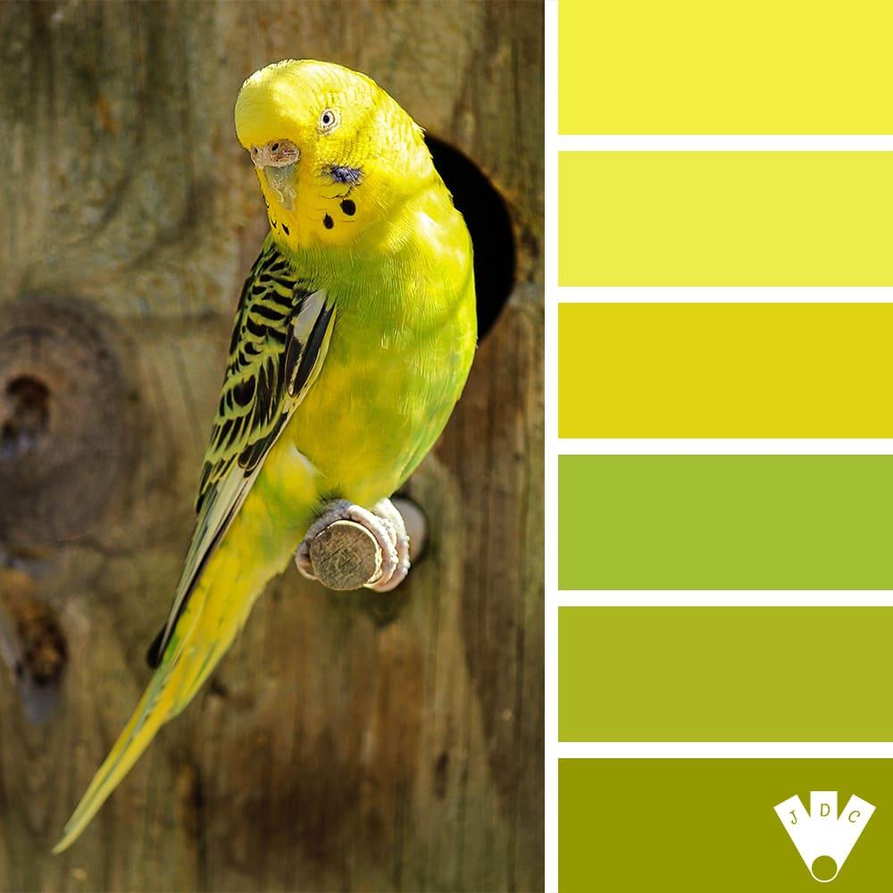 Color palette d'une photo de Perruche jaune et verte.