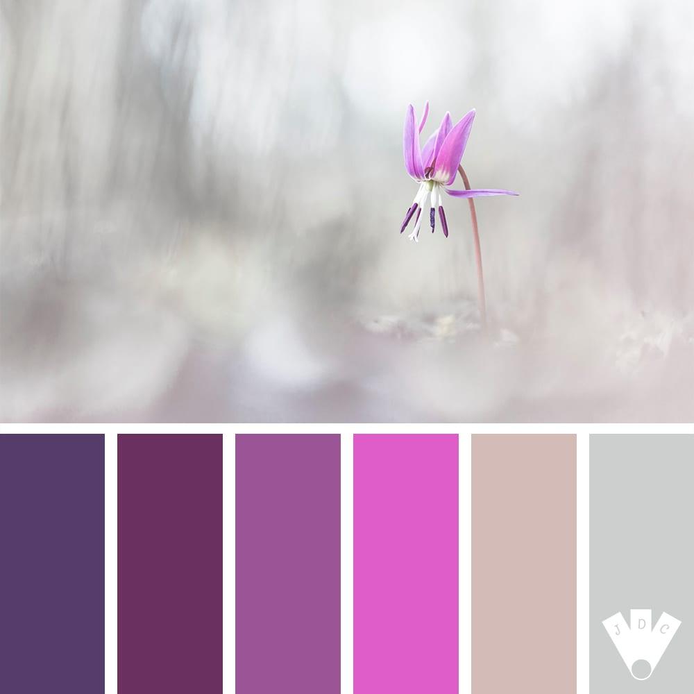 Color palette à partir d'une photo d'Erythrone Dent-de-chien du photographe François Levillon