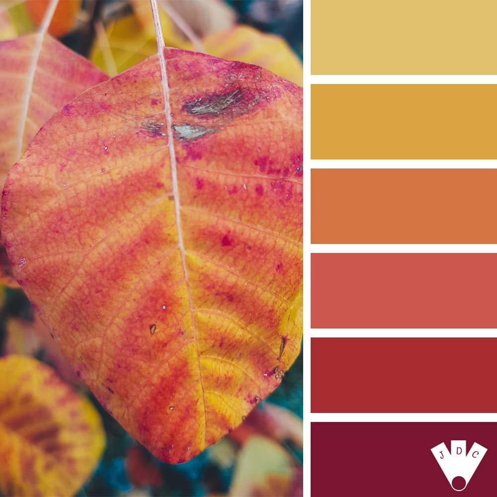 Color palette à partir d'une photo de Callistta Photographie