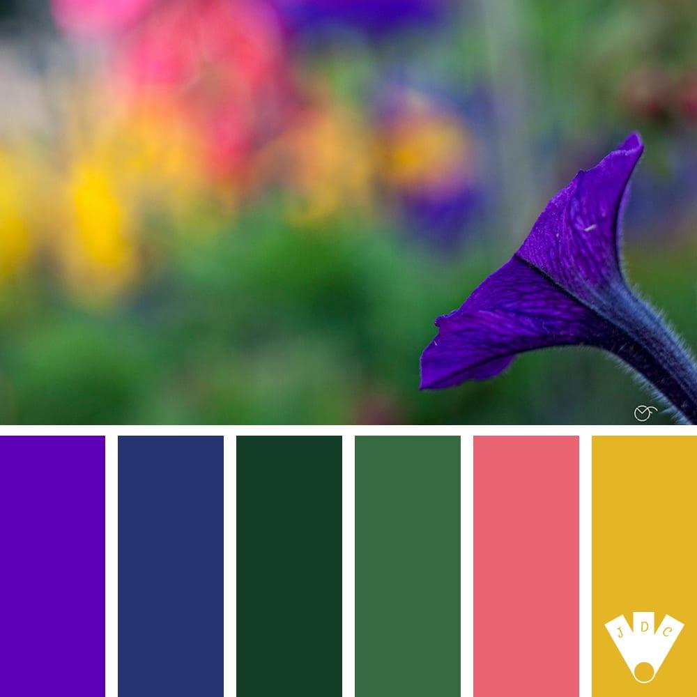 Color palette à partir d'une photo du photographe Michael Fremiot