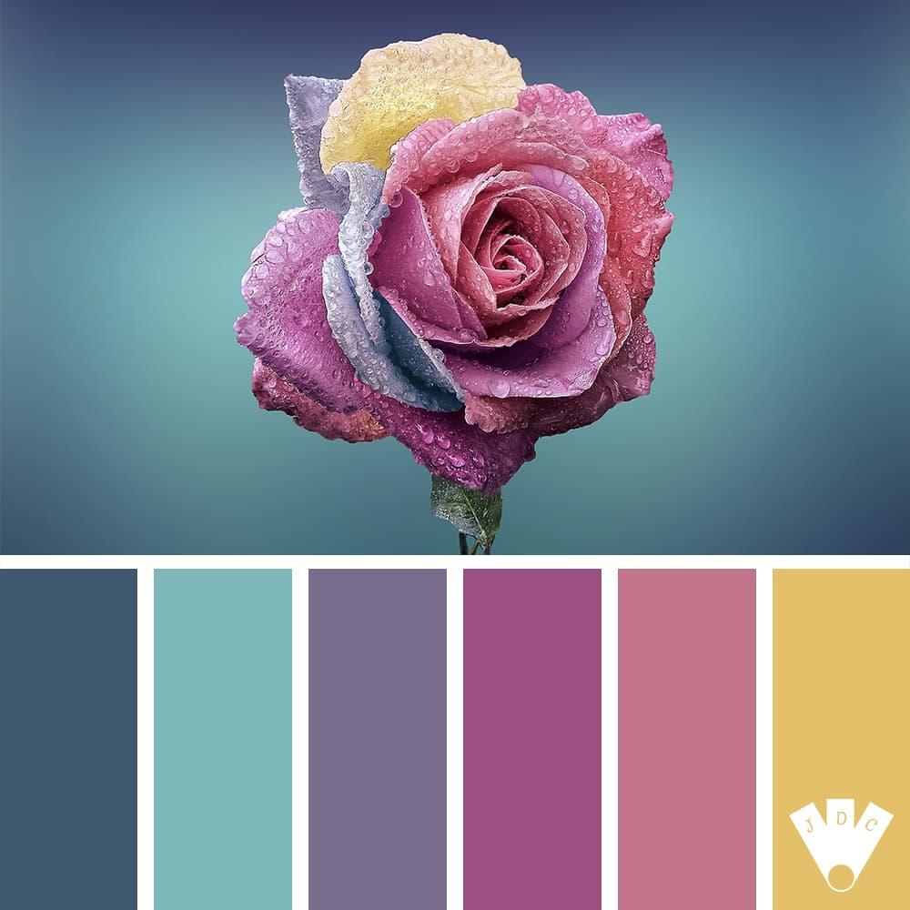 Color palette à partir d'une photo d'une rose avec des gouttes d'eau