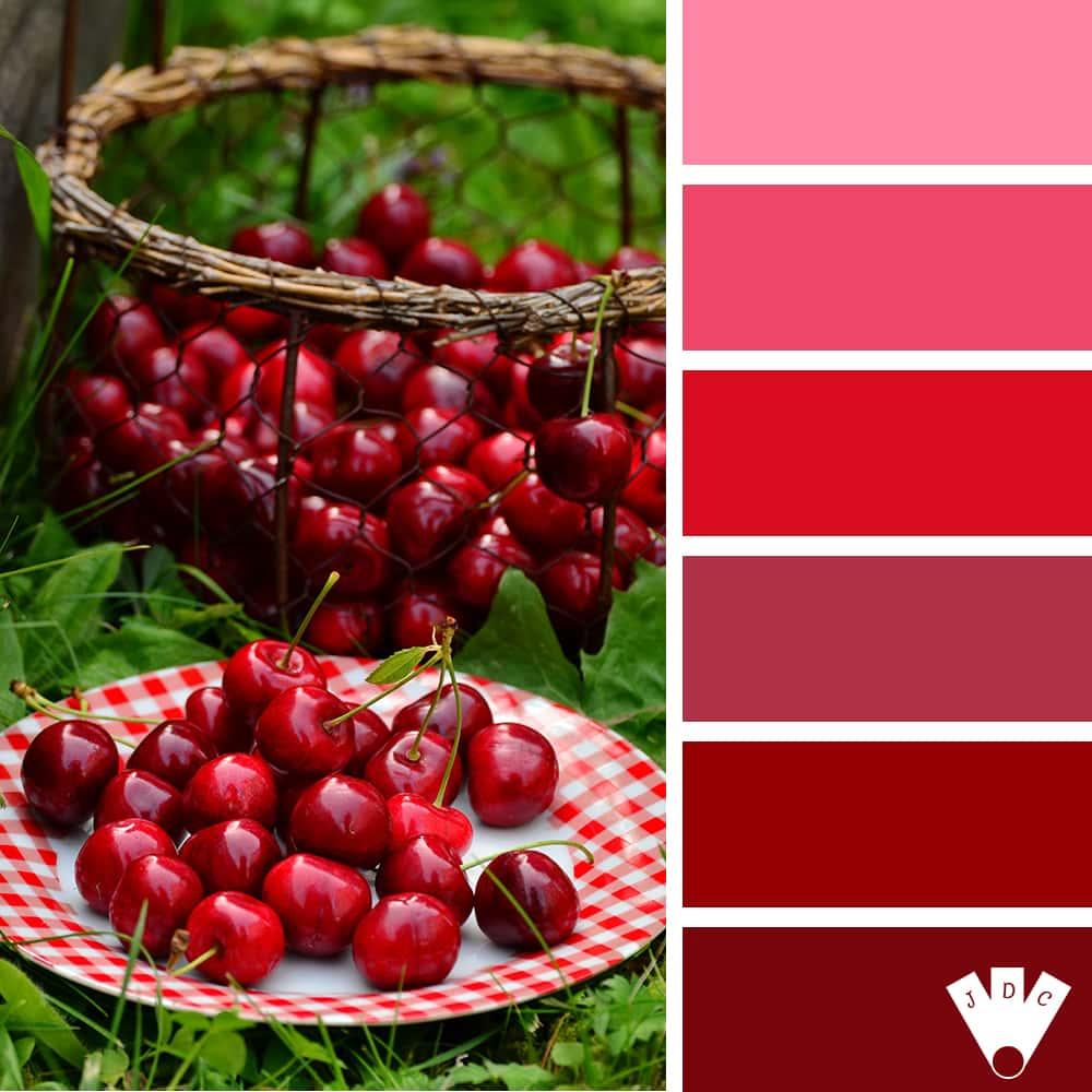 Color palette rouge à partir d'une photo de cerises