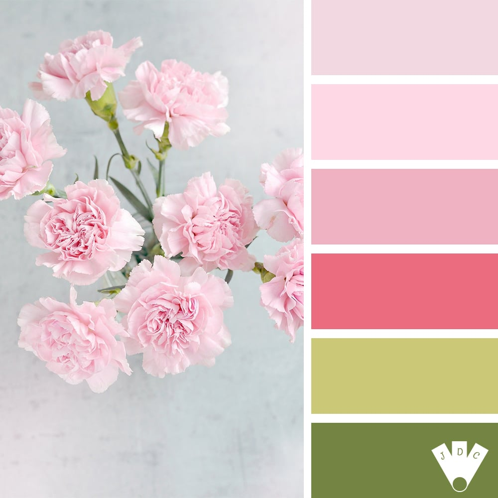 Color palette à partir d'uen photo de fleurs rose