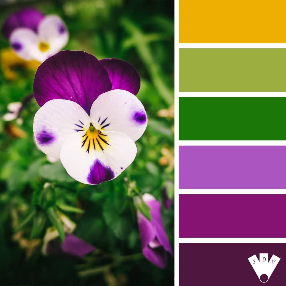 """Color palette à partir d'une photo de fleur au nom de """"pensée"""" par la photographe Callistta Photographie"""