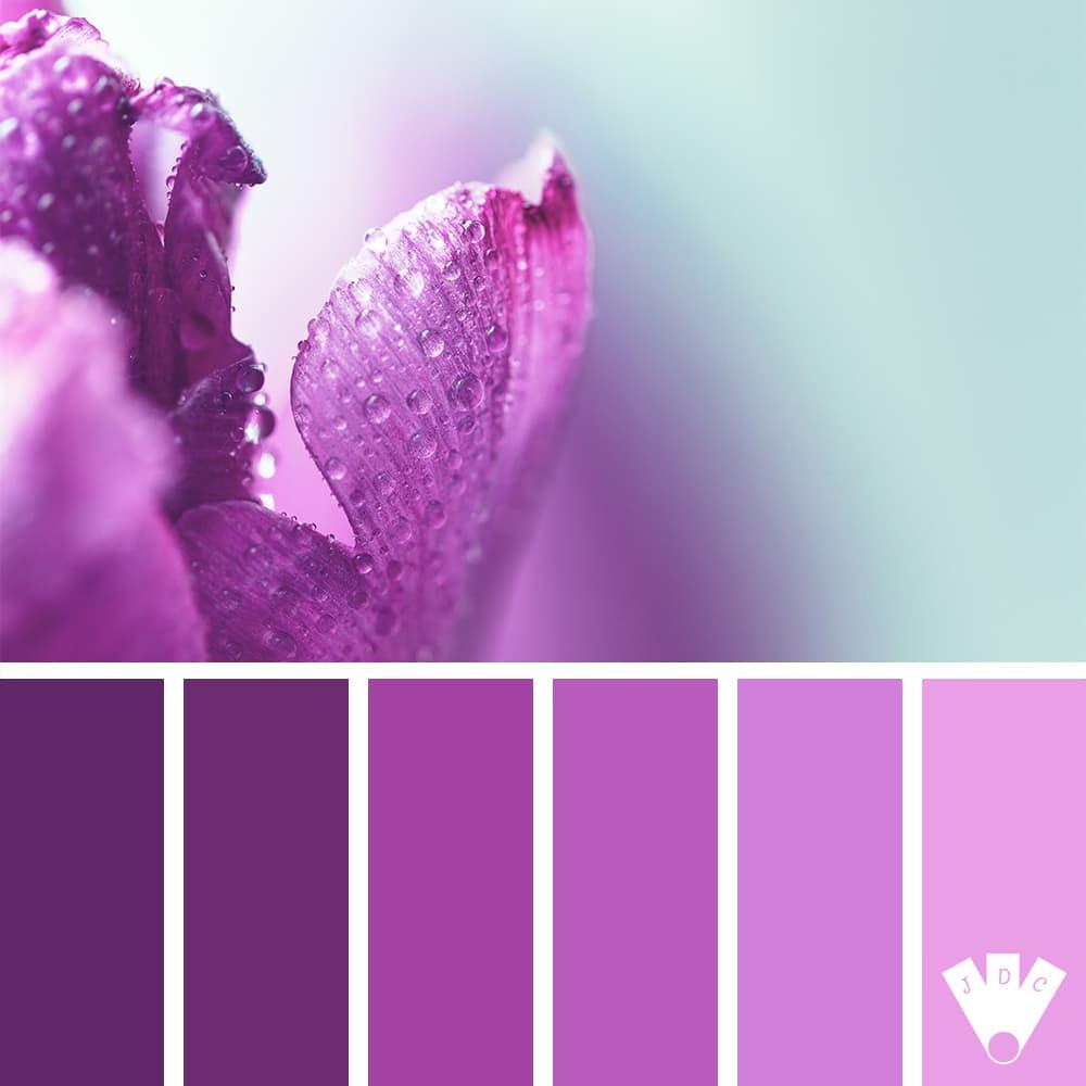 color palette à partir d'une photo d'un pétale violet