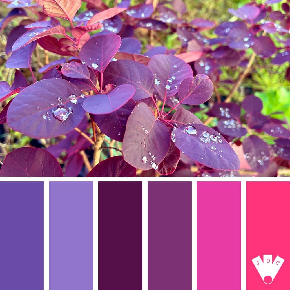 color palette à partir d'une photo de Maître Roger #monanalyse