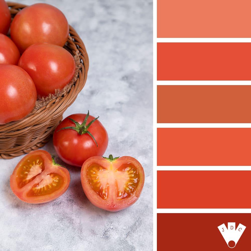 color palette à partir d'une photo de tomate