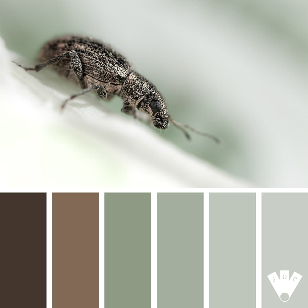 Color palette d'une photo d'un charançon par le photographe OuiOuiPhoto