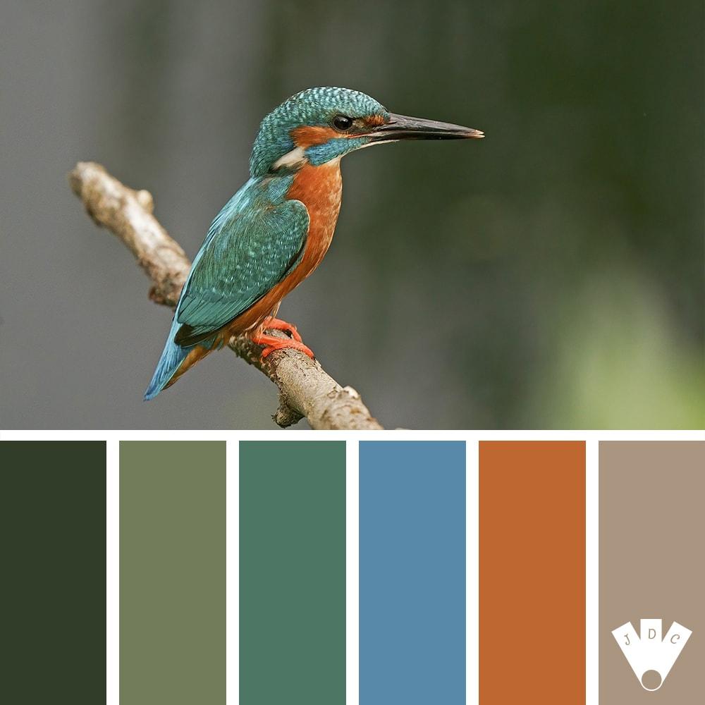 Color palette à partir d'une photo d'un martin-pêcheur