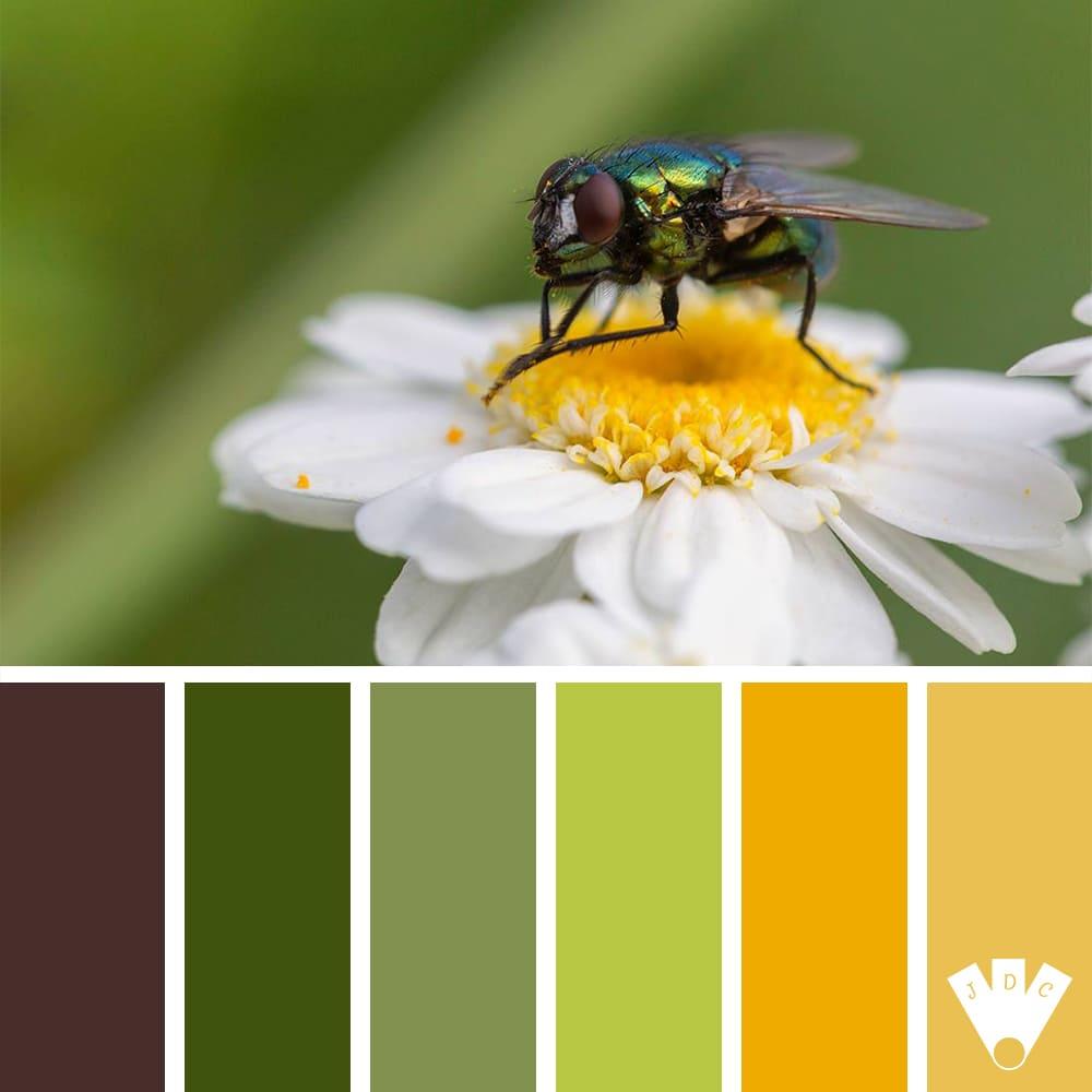 Color palette à partir d'une photo du photographe Michaël Fremiot