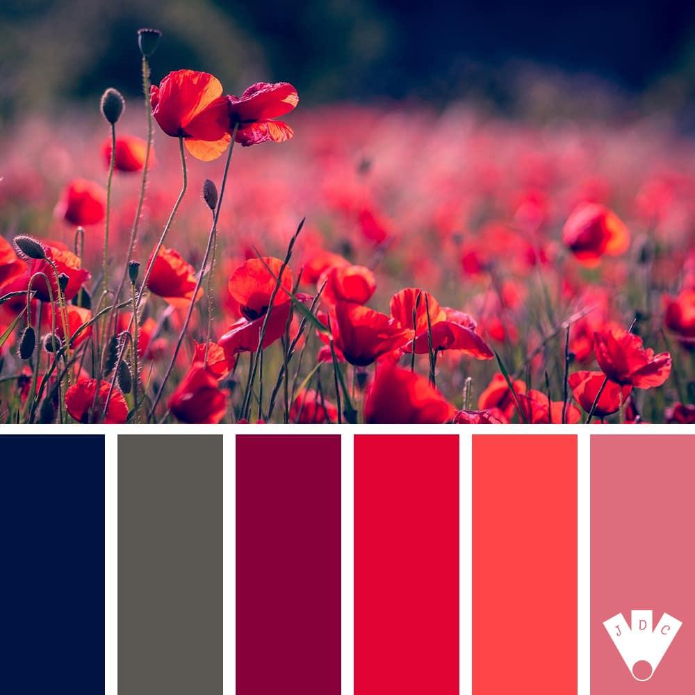 Color palette à partir d'une photo d'un champ de coquelicot.
