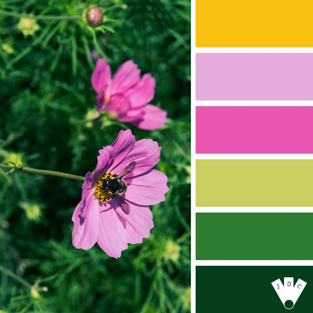 Color palette à partir d'une photo de fleur avec une abeille par la photographe Callistta Photographie